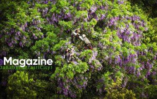 Bán đảo Sơn Trà đẹp ngất ngây mùa hoa Thàn Mát