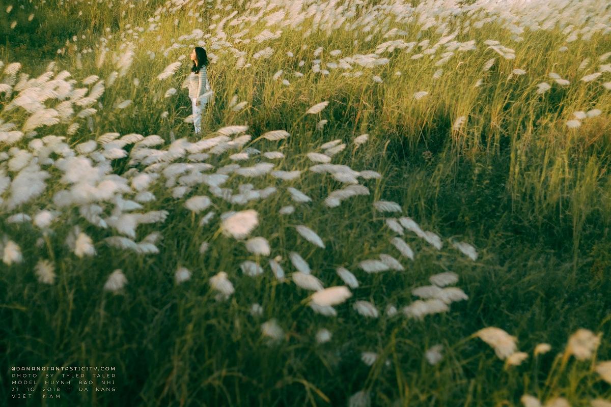 Cỏ lau đã vào mùa rồi, Đà Nẵng những ngày này đẹp lắm! Mùa cỏ lau tại Đà Nẵng 3