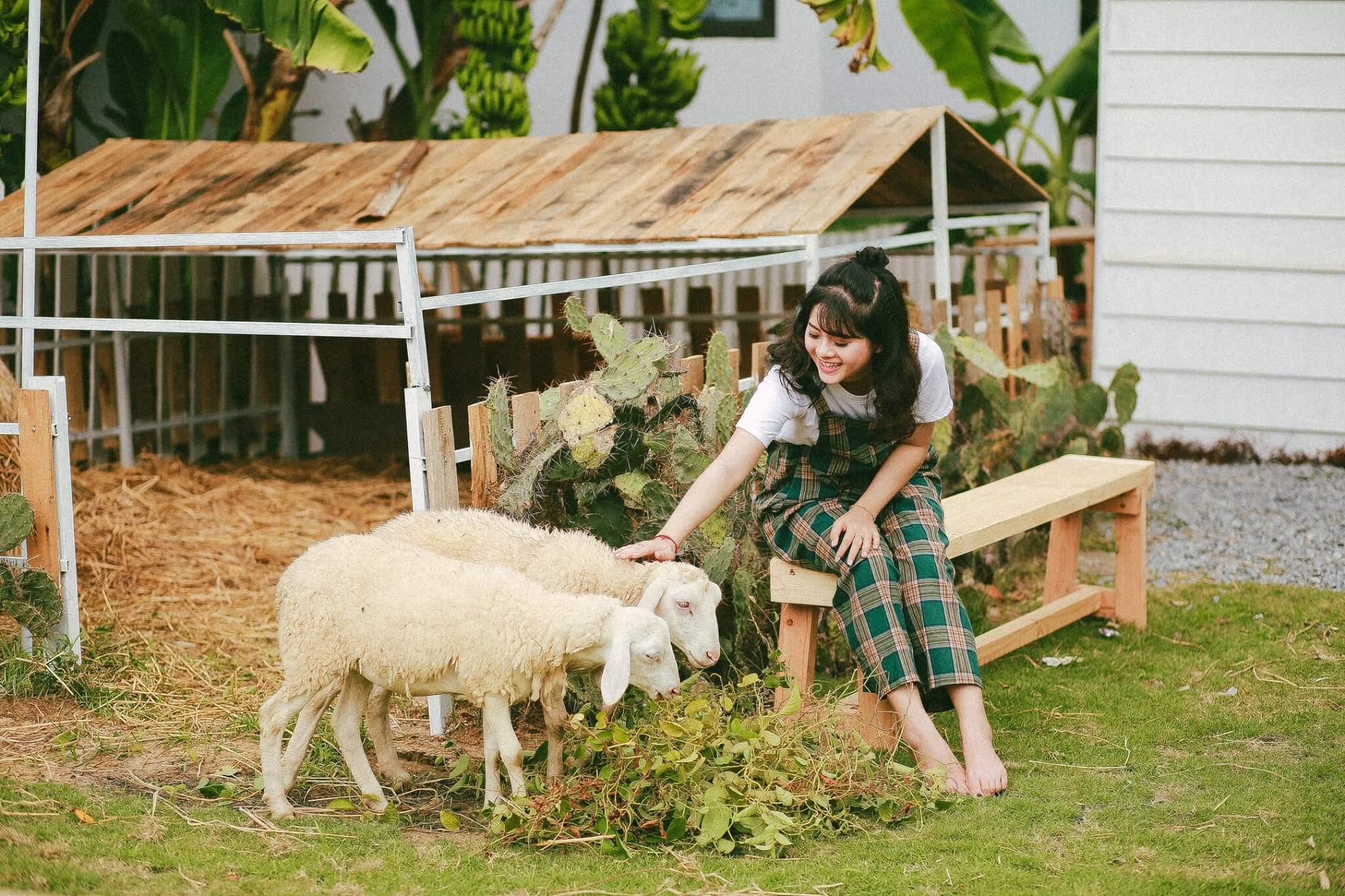 Dream House Phim Truong Moi Toanh Tai Da Nang Fantasticity Com 08