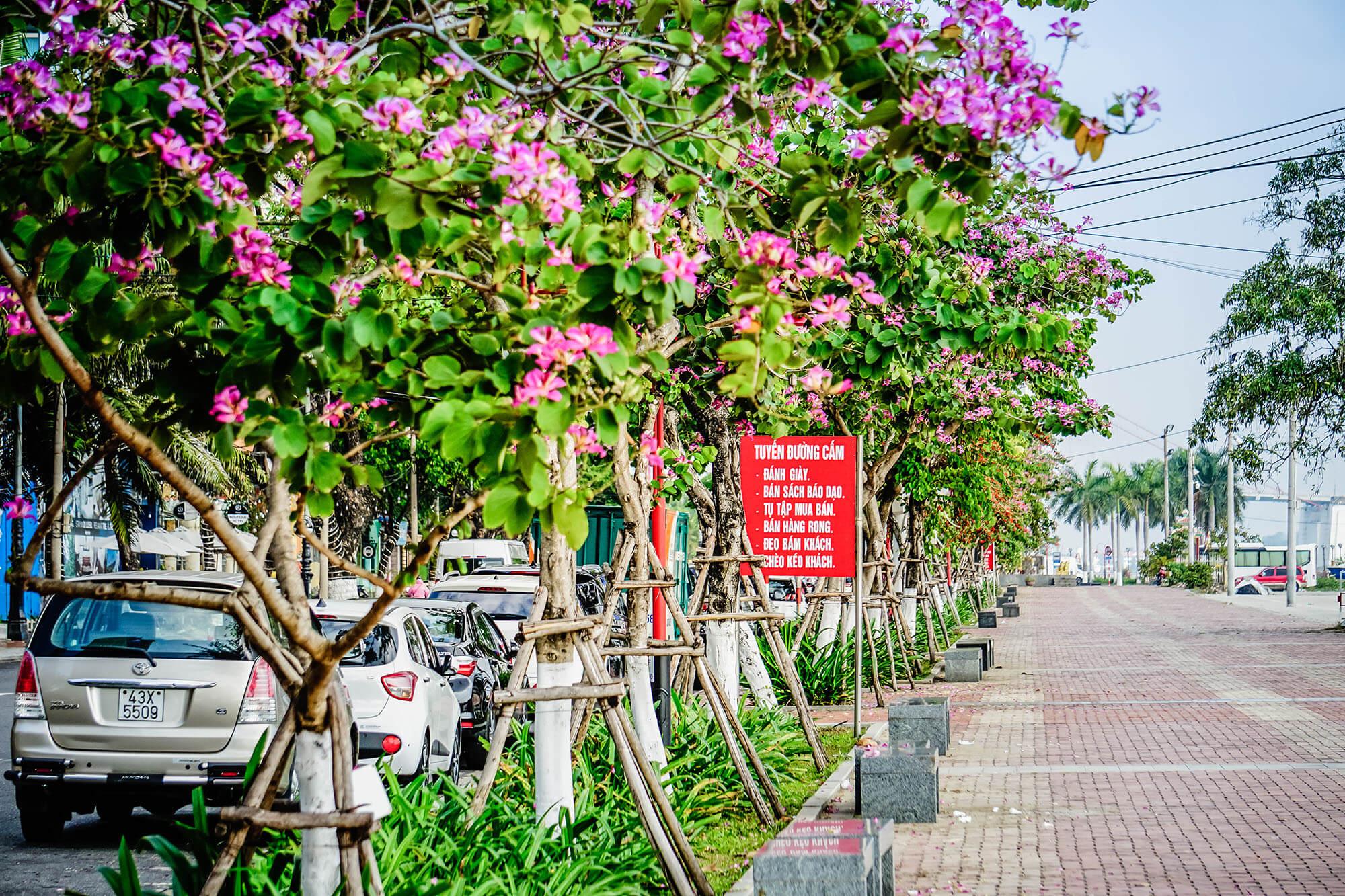 Da Nang Mua Ban Hoang Hau Danang Fantasticity Com 011