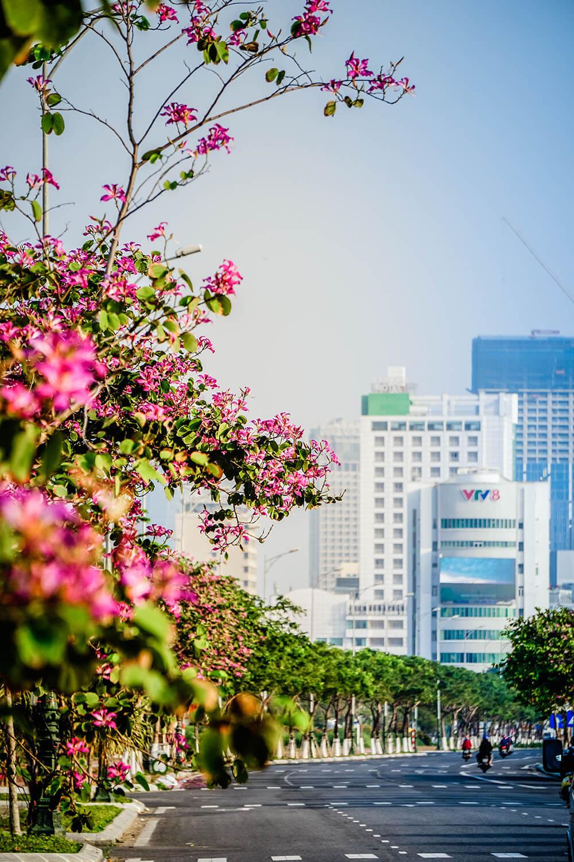 Da Nang Mua Ban Hoang Hau Danang Fantasticity Com 012