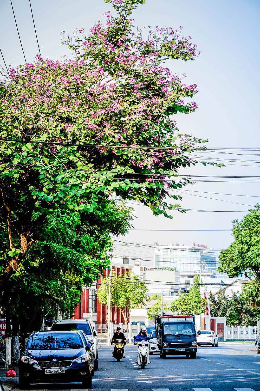 Da Nang Mua Ban Hoang Hau Danang Fantasticity Com 014
