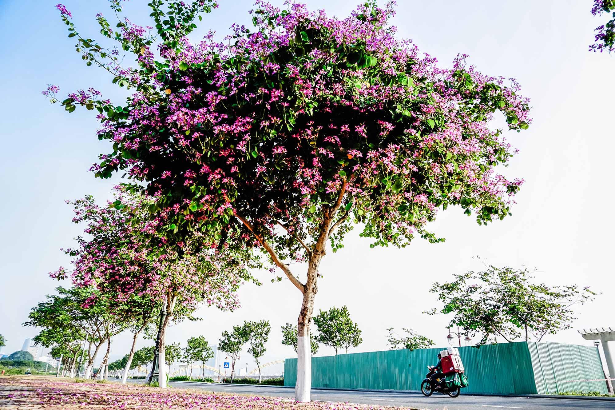 Da Nang Mua Ban Hoang Hau Danang Fantasticity Com 018