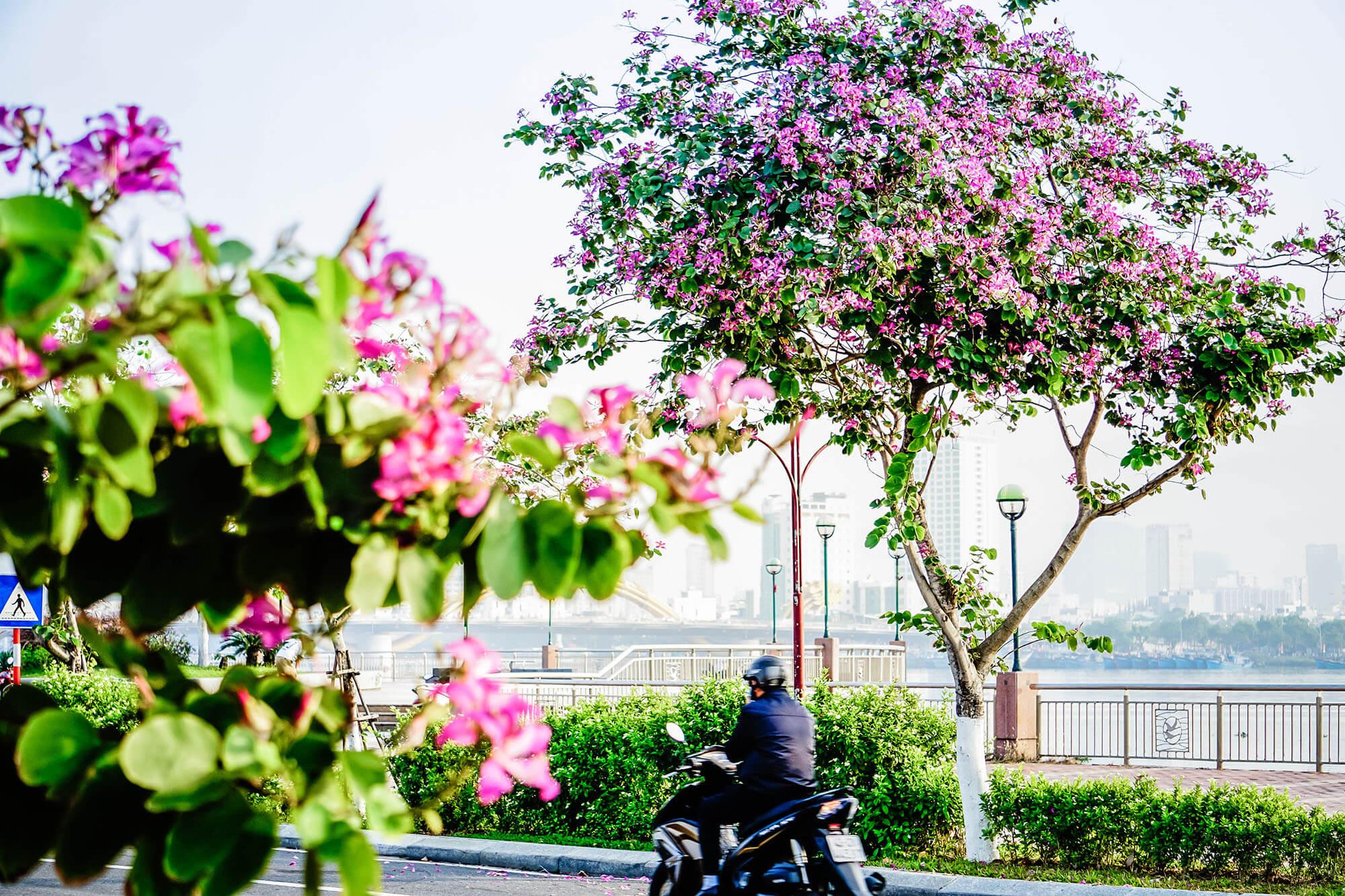 Da Nang Mua Ban Hoang Hau Danang Fantasticity Com 06