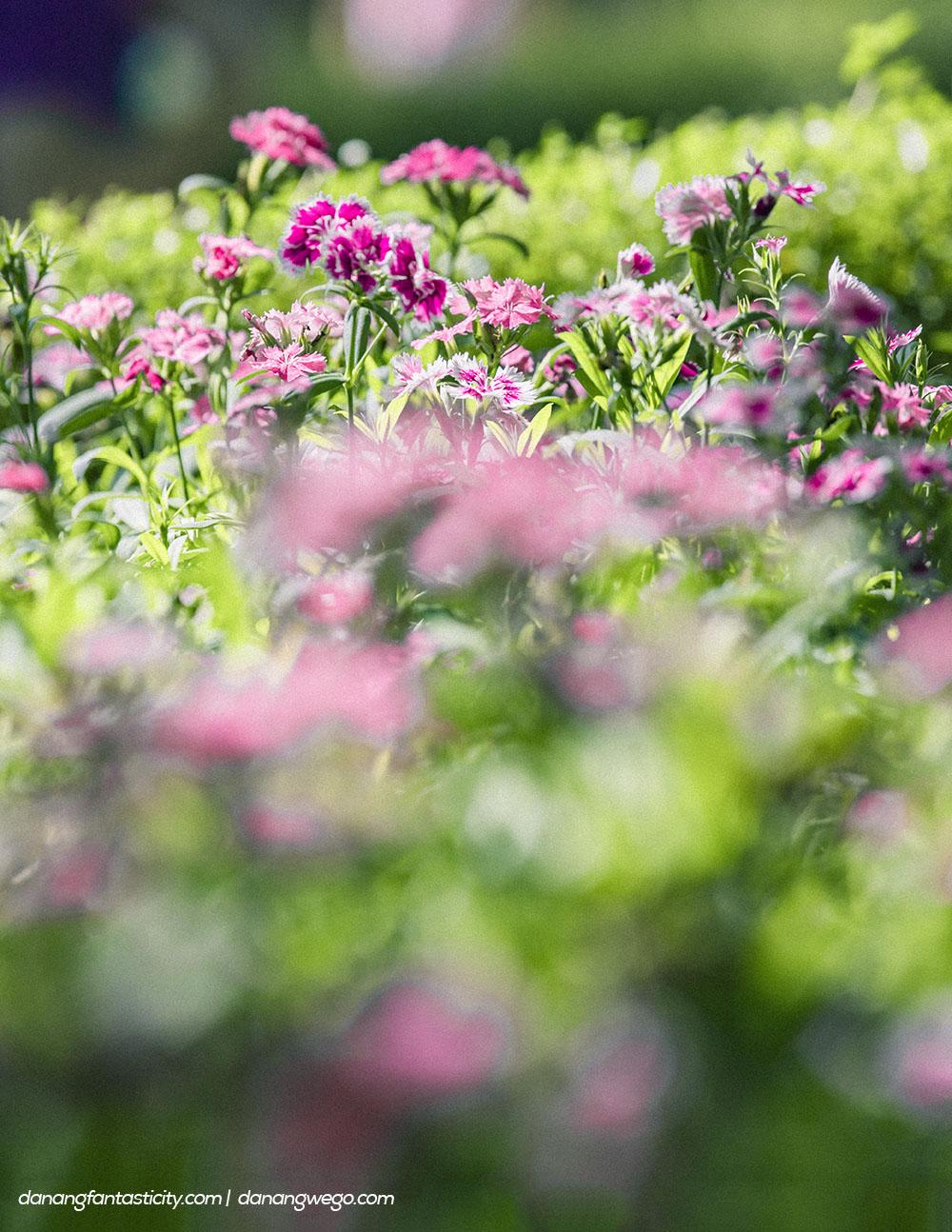 Nhung Dieu Khong The Bo Lo Tai Sun World Ba Na Hills Vuon Hoa Le Jardin Damour 05