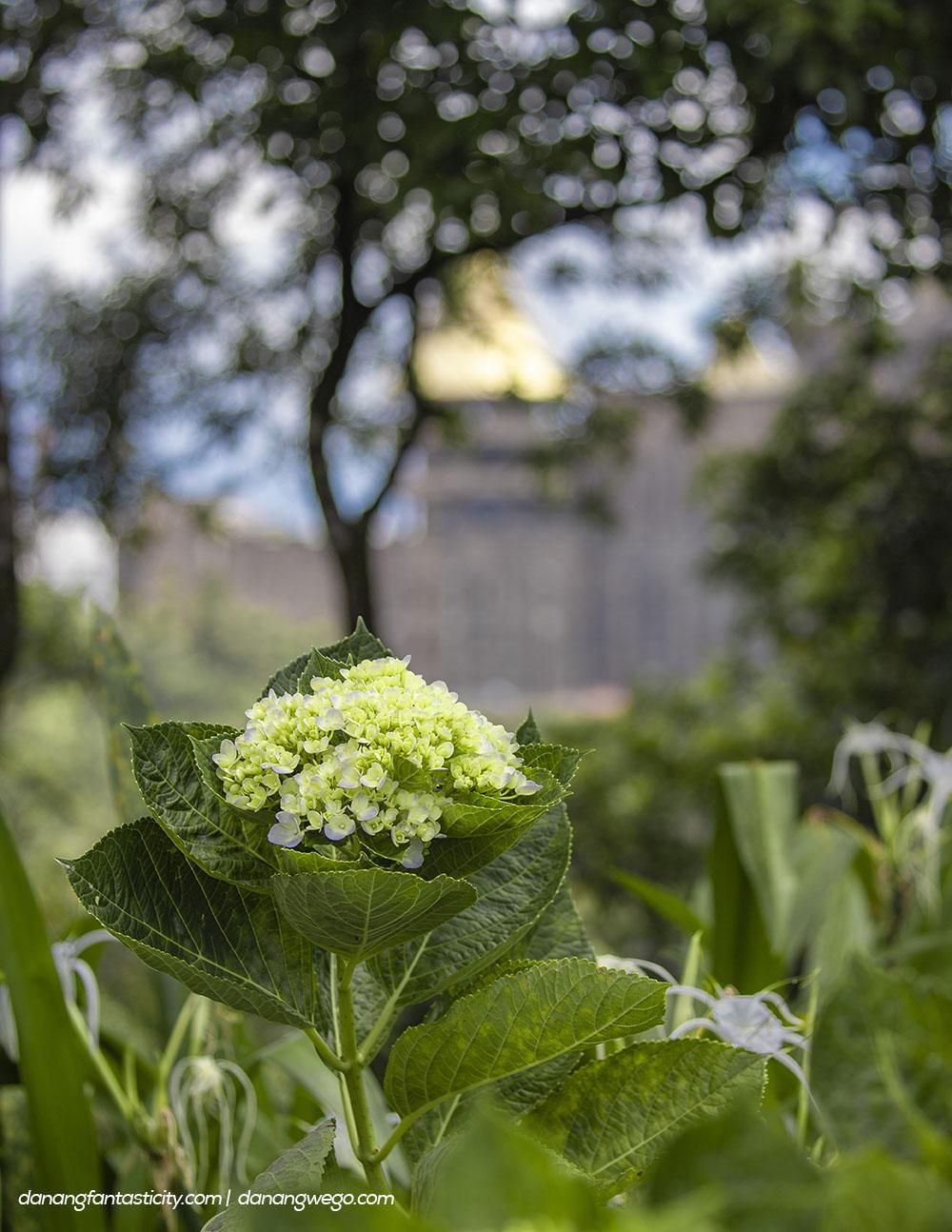 Nhung Dieu Khong The Bo Lo Tai Sun World Ba Na Hills Vuon Hoa Le Jardin Damour 07